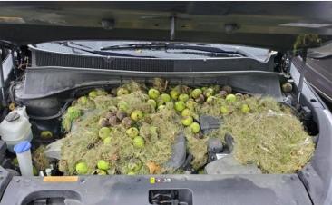 ¿Tu coche huele raro? Tal vez alguien lo esté utilizando como almacén para el invierno